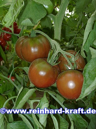 Reinhards tomaten fotogalerie - Noir de crimee ...